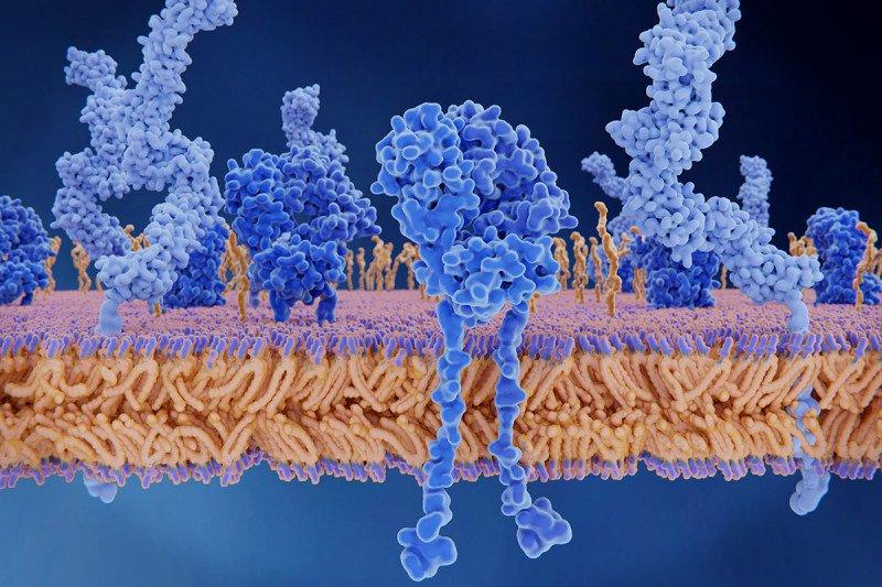 CD4+ T cell