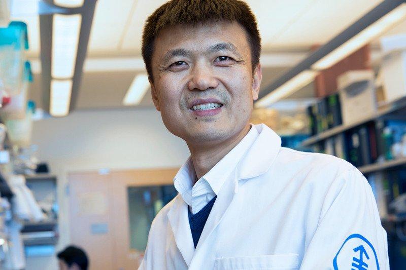 MSK immunologist Ming Li
