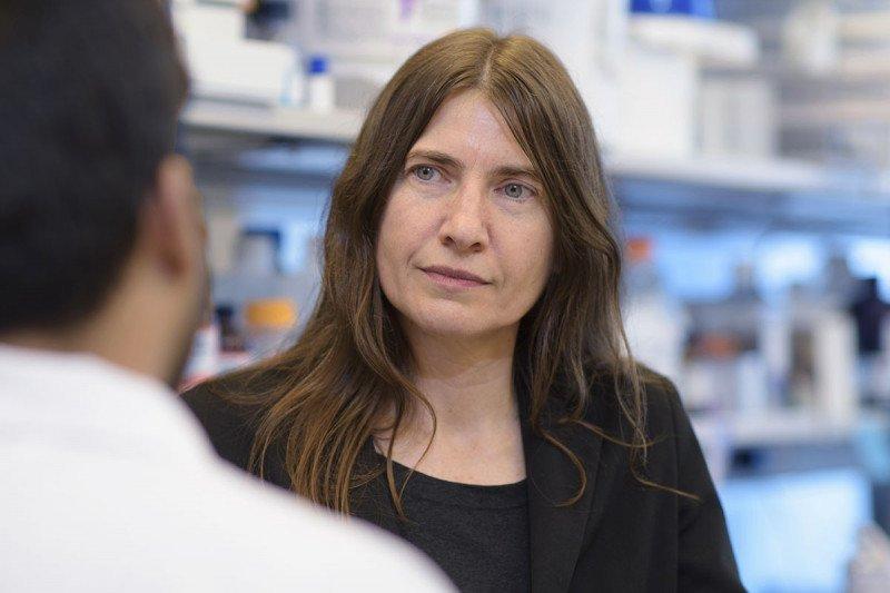 Scientist Gabriela Chiosis in her lab