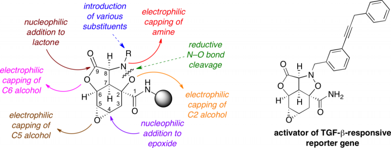 JACS 1999 graphical abstract, Journal of the American Chemical Society