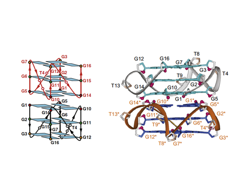 5'-End-Stacked Dimeric Parallel G-Quadruplexes