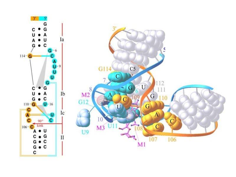 Streptomycin-RNA Aptamer Complex