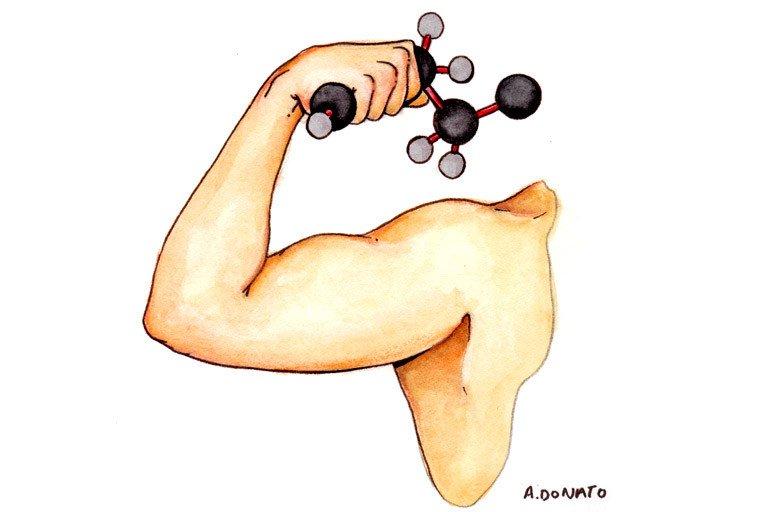 Conjugated Linoleic Acid, CLA