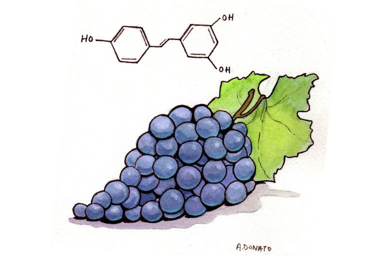 Resveratrol Memorial Sloan Kettering Cancer Center