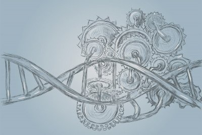A drawing of a DNA molecule with enzymes.