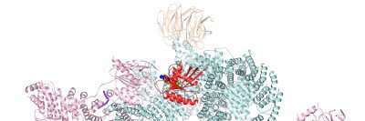 cryo-EM picture of mTORC1