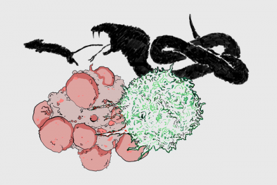 An illustration of an immune cell killing a cancer cell, and a snake attacking a mouse