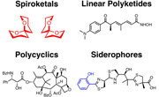 Diversity-Oriented Synthesis and Rational Drug Design for Chemical Biology and Drug Discovery Research in the Tan Laboratory
