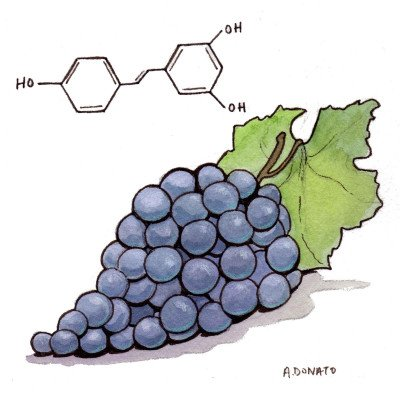 Resveratrol May Prevent Breast Cancer - WebMD