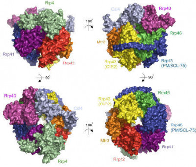 Structure of the human 9-subunit exosome