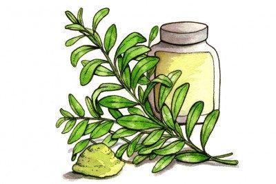 Oldenlandia diffusa