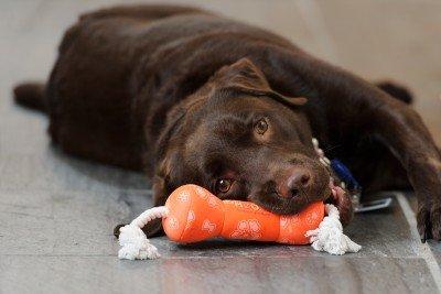 Hope, MSK caring canine