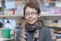 Hitomi Sakamoto