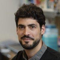Olivier  Levy, PhD