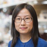 Jing Hu, PhD