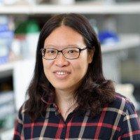 Shin-Yi Du, PhD