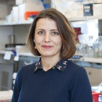 Olivera Grbovic-Huezo, PhD Research Lab manager