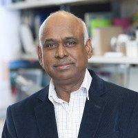Annamalai Selvakumar, PhD