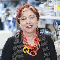 Adriana Haimovitz-Friedman, PhD
