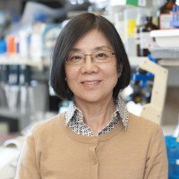 Xinzhu Deng, MD, PhD