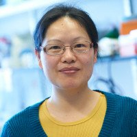Junru Wang, PhD