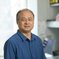 Xin Wang, PhD