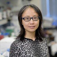 Rong Wang, PhD