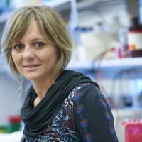 Elisa Oricchio, PhD