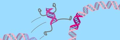 "Cartoon illustration of DNA double-helix segment (with arms and legs) ""jumping"" to from one part of the double-helix to another."