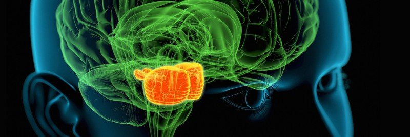 Illustration of brain in green with pons area highlighted in orange.