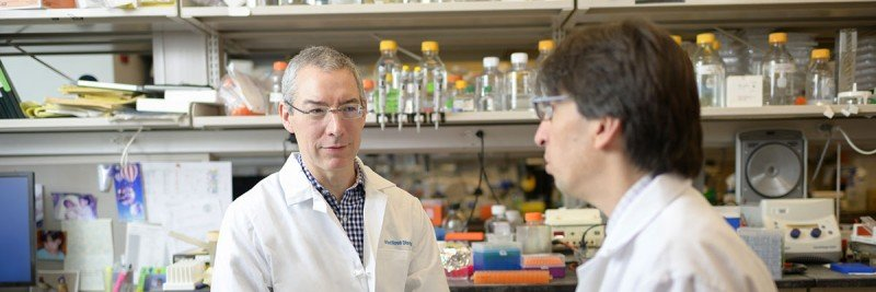 MSK physician-scientists Michael Glickman and Gil Redelman-Sidi